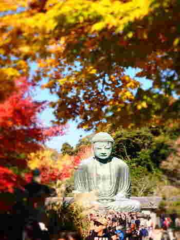 紅葉の季節。都心から約1時間で訪れることができる古都鎌倉では、大仏や数々のお寺を赤や黄色の葉っぱたちが彩り豊かに四季を味合わせてくれています。
