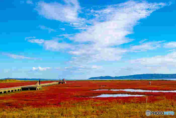サンゴソウが真っ赤に染まる秋の能取湖の美しさは傑出しています。澄み渡った心地よい秋の空気、抜けるような青空、湖を覆いつくす紅いサンゴソウは秋の網走における風物詩となっています。