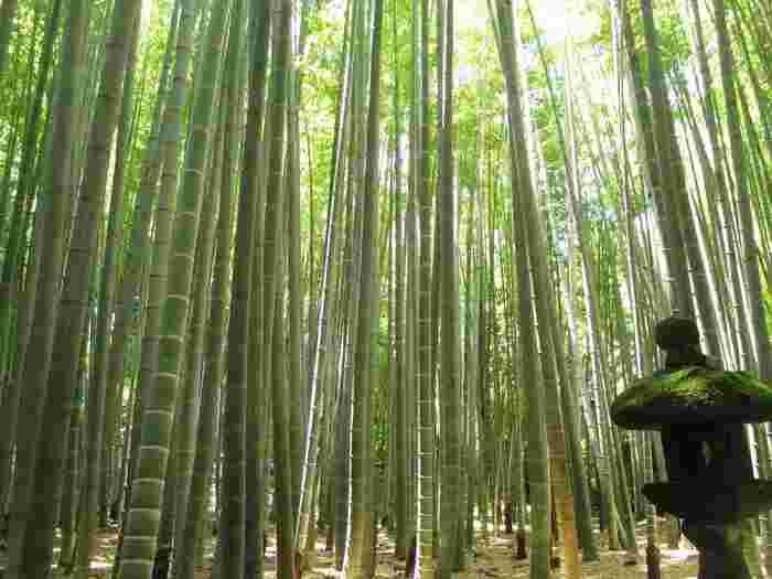 「竹の寺」と呼ばれている報国寺には約2000本もの孟宗竹が植えられており、ここまで美しく手入れされた竹の庭園はとても珍しいそう。深呼吸すると心の奥まで綺麗になれそうなほどのマイナスイオンであふれています。
