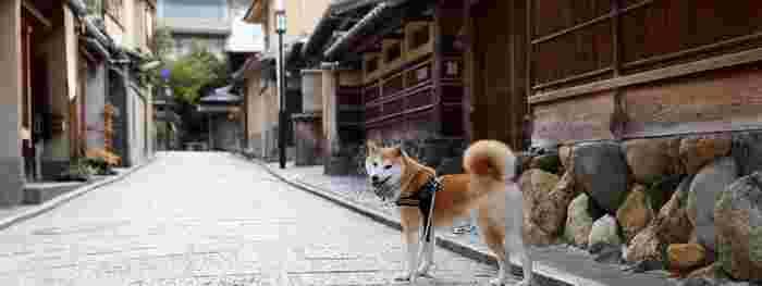 京都の街並みがとっても似合う柴田部長。こんな凛々しい表情も素敵ですね!