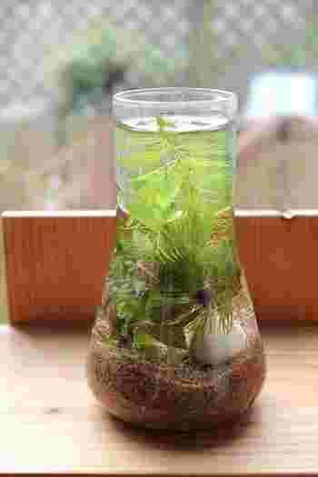 お気に入りのガラス容器はあるけど、生花を飾るのはちょっと苦手……という人は【アクアリウム】を作ってみるのはいかがでしょうか?  自分の好きなように作ることができるので、愛着も湧きますし、少しずつアレンジを加えていくこともできます。この夏新たに始める趣味としてもおすすめです。