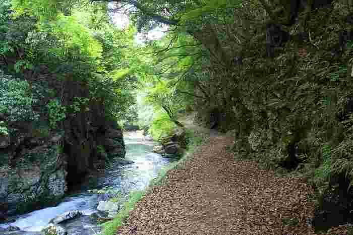 【清滝川に沿いの東海自然歩道(京都一周トレイル/北山コース)】