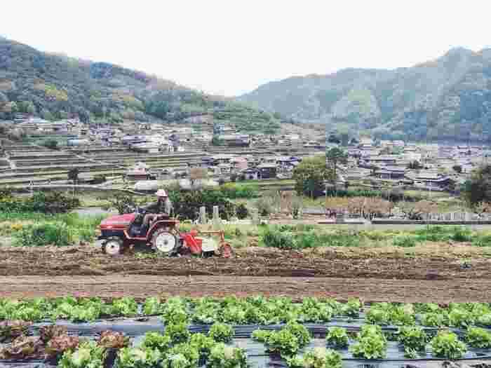HOMEMAKERSの畑では、季節ごとに10~20種類ほどの野菜や果物を栽培しているそう。すべてにおいて化学肥料や農薬は使用していないので、安全に美味しくいただくことができます。