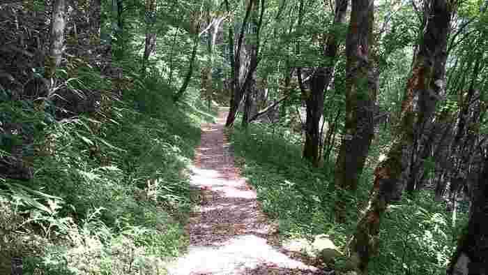天狗荘へ行った方は、ぜひこちらへも*  天狗荘から延びる約4.5kmの道は、「セラピーロード」と呼ばれる散策スポットになっています。森林の中の気持ちの良い道をのんびり散策すれば、疲れた心も癒されますよ。一部には、地元産のヒノキのチップを敷き詰めた個所もあり、ヒノキの良い香りでリフレッシュできます。