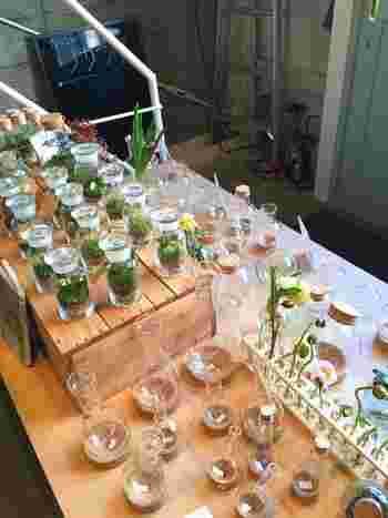 リカシツではさまざまなワークショップが開催されています。そのひとつが、理化学ガラスに鉢植えのように苔を入れて楽しむ「苔テラリウム」。