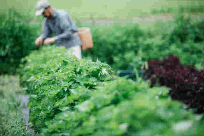 栃木県大田原市の両郷という自然豊かな里山地域にある「きくち農園」。肥料に自家製の米ぬかぼかし肥料を使用し、農薬や化学肥料を使わずに作られている野菜は、野菜本来の味や香り、食感を楽しめます。