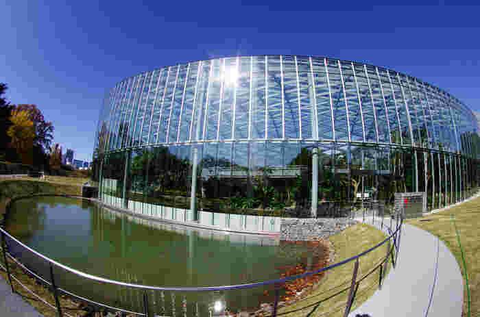 新宿御苑大温室はいつでもドーム内の気温が25度に保たれています。冬は暖かくていいですね!