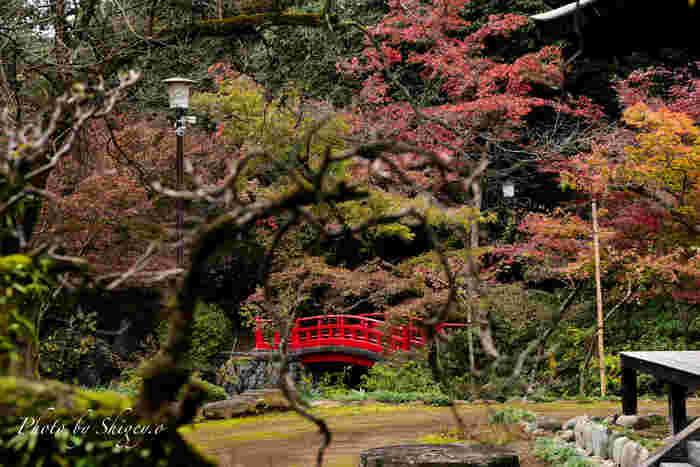 11月中旬~12月上旬は紅葉が見ごろ。凛と澄んだ空気のなかで、赤や黄色に色づく葉を眺めてみませんか?