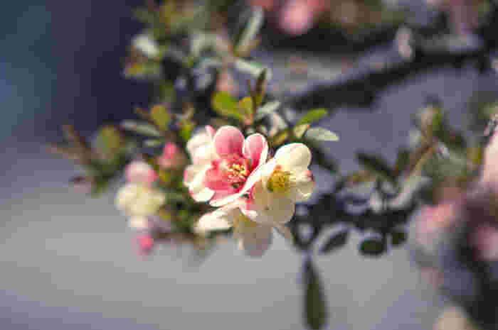 春の足音が聞こえてきましたね。梅の花もほころび始め、空気も少しずつ・ゆっくりと暖かくなってきました。