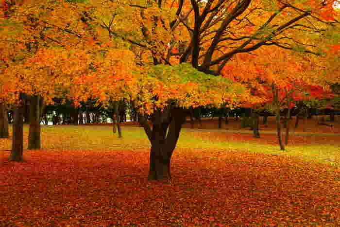 手を加えていない自然の美しさに圧倒されるばかり。秋色のグラデーションのじゅうたんが、目を楽しませてくれます。