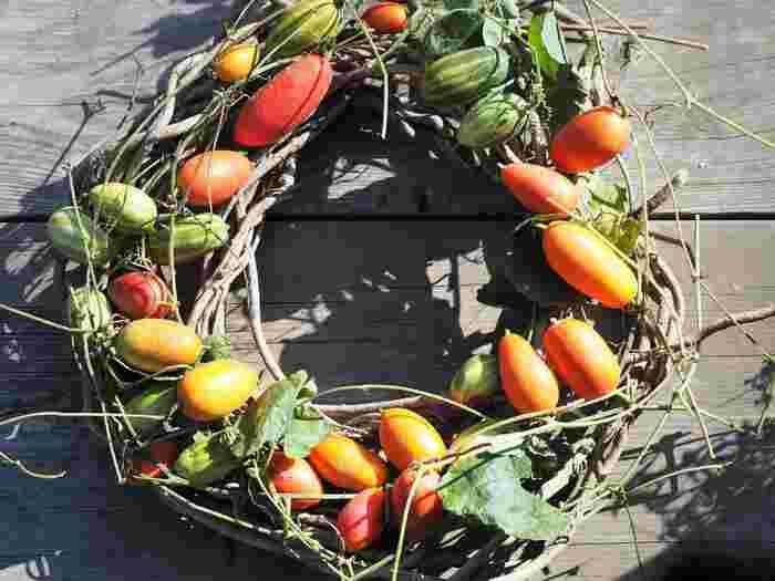 【素朴な田舎のリース】 あけびのつるに、からすうりの実を置いて。ほのぼのとした田舎の秋を思わせるリースです。お部屋に飾れば、心から癒されるインテリアに♪からすうりの実は、秋から晩秋にかけて熟し、朱色やオレンジ色になります。