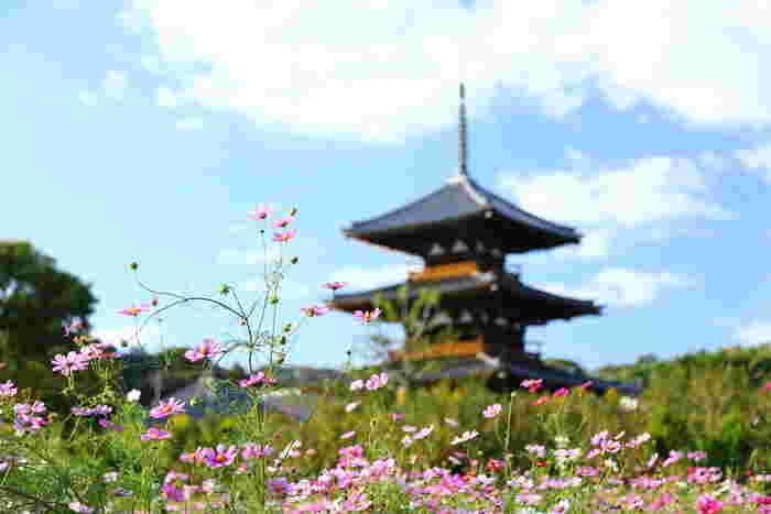 寺社仏閣だけでなく、美しい花々や雄大な自然も魅力の奈良県。ぜひ四季折々の景色を見に行ってみてくださいね。
