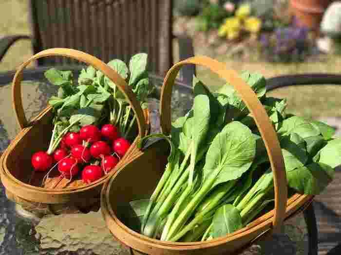 7月に種まきをおこなうのであれば、梅雨があけた今行うのがおすすめです。1年の中でも気温が高くなる時期ですので、暑さや病気に強い野菜を選ぶことがポイント。夏に育てやすい野菜を選べば、秋頃には美味しい野菜を楽しめますよ◎