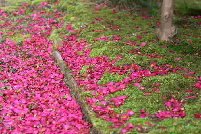 散った花びらがびっしり積もってじゅうたんをつくります。
