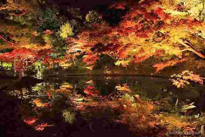 「高台寺」では、季節折々に「夜の特別拝観」を行っています。ライトアップされた枯山水庭園や竹林は、幻想的で趣きたっぷり。期間等詳細は、以下の公式サイトで確認しましょう。