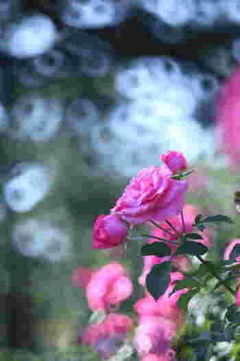 咲き誇っているお花の近くに顔を寄せてみましょう。お花特有の良い香りを感じたら、胸がときめきます。