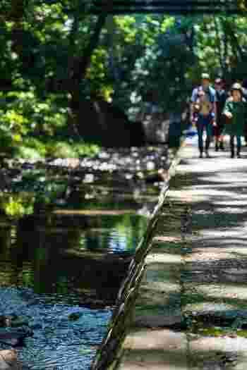 谷沢川で構成された約1kmの渓谷には、30ヶ所以上の湧水があり、穏やかな川のせせらぎを聞きながら遊歩道を歩くと、暑さを忘れそう。