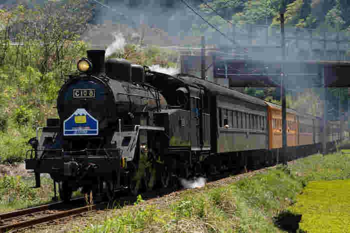 金山駅と千頭駅を結ぶ大井川鐵道では、毎日蒸気機関車が運行されています。のどかな景色と蒸気機関車が調和し、まるで日本の鉄道開拓時代にタイムスリップしたかのような錯覚を感じます。