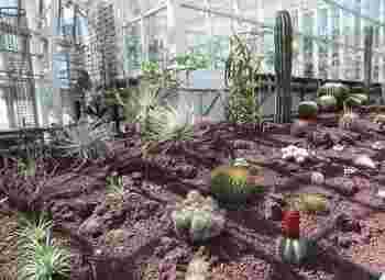 多肉植物やサボテンも充実していて見所いっぱいです。