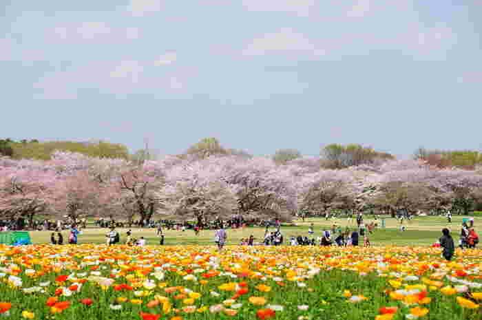 時期によってはポピーと桜の競演も。満開の花々からエネルギーをたっぷりもらえそう。