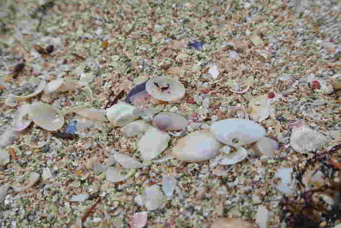 各海で拾える貝殻は様々。せっかくですから旅の思い出を形にしましょう。波にもまれてこすり合わさったりして、同じものは二つとありません。写真を撮るのにもおススメの被写体です♪