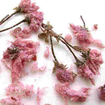 桜スイーツに欠かせない桜の塩漬けは、スーパーなどでも入手できますが、通信販売でも手軽に購入できます。花は軸のあるものと無いものがあるようですね。写真のような軸ありの桜の塩漬けは、デコレーションがしやすいかも。