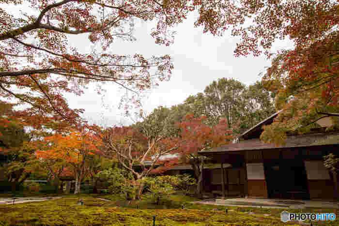 太陽の塔、自然文化園を中心に様々な樹々が鮮やかに彩る万博記念公園ですが、日本庭園の紅葉の美しさは格別です。紅葉まつりが開催される紅葉のシーズンには、深紅に染まったカエデと風情ある日本家屋が織りなす、掛軸のような景色を眺めることができます。