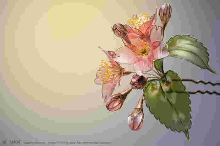 満開の大木は厳かでどこか凄絶なまでの美しさを漂わせる、日本の美の象徴とも言うべき桜は、一枝、一輪の花を見ればどこまでも可憐。そんな桜を榮さんが咲かせれば、何とも言えない艶やかさを纏います。また開いた花と蕾、葉のバランスが絶妙。桜のもっとも美しい姿を透明な光の中に閉じ込めた、そんな簪です。 Photo by Ryoukan Abe (www.ryoukan-abe.com)