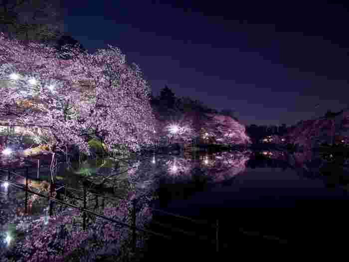 桜が見ごろを迎える時季になると、井の頭恩賜公園ではライトアップが施されます。光を浴びて輝く桜の樹々を、井の頭池の水面が鏡のように映し出す、幻想的な風景が現れます。