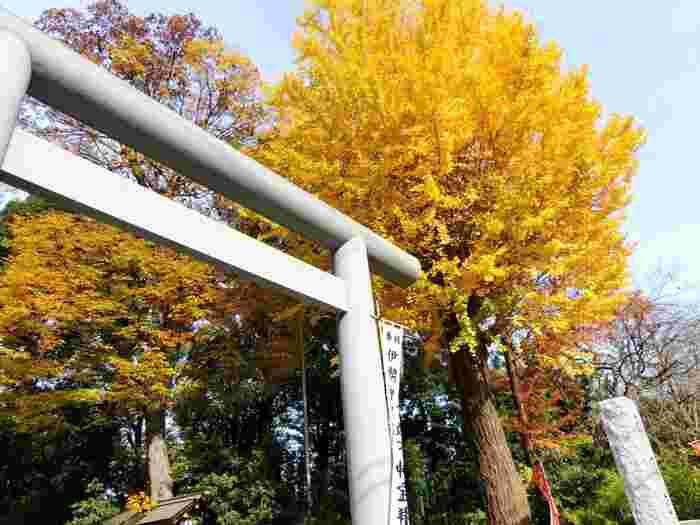 JR「阿佐ヶ谷駅」北口から徒歩2分とアクセスの良い場所にある神社です。境内にはイチョウやクスなどの木々が立ち並び、特に御神木とされる1本のケヤキは、元々2本だった木が長年寄り添うことで一本となった歴史があり、夫婦円満や良縁のご利益があるとされています。