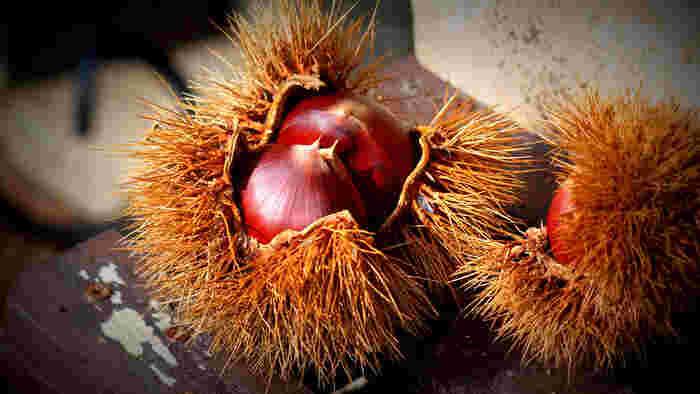 栗を剥いた時に出て来る栗の皮。栗の染色には甘くて美味しい実の方ではなく、こちらの皮を使います。捨てちゃう部分で出来るのが、とってもエコ。渋皮煮を作るときの栗のゆで汁を使っても染められます。