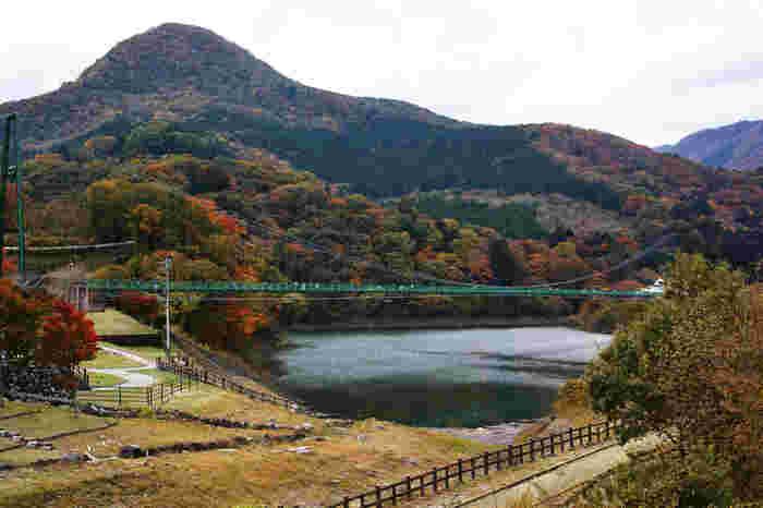 全長320mの大吊橋は、本州一の長さを誇ります。見渡す限りの紅葉を眺めながら吊橋を渡るのは、スリリングで楽しいですよ。見頃は11月上旬から中旬と少し遅めです。