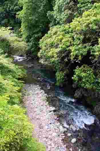 【栂尾・白雲橋からの清滝川】