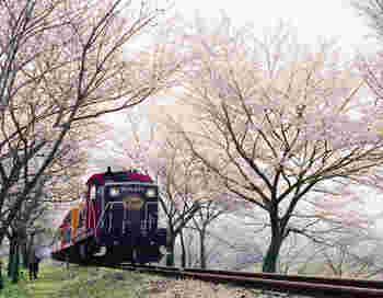 """花も団子も!「京の味覚」をお供に。""""桜のトンネル""""をくぐる、春の京都お散歩ガイド"""