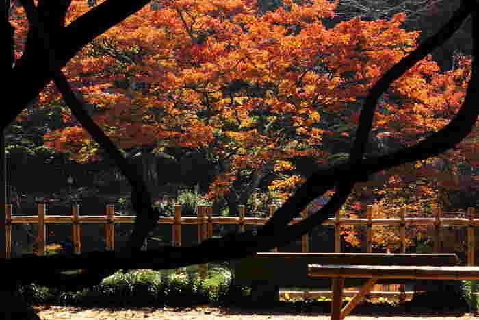総面積は15万坪で、なんと東京ドーム約10個分の広さなんだそう。池泉回遊式庭園なので、池の周りを散策しながら紅葉を楽しめます。御船山楽園の紅葉は、11月上旬~下旬が見頃と言われています。樹齢170年の大モミジの古木や湖面に映る色とりどりの紅葉など、この季節ならではの美しさを存分に満喫できます♪