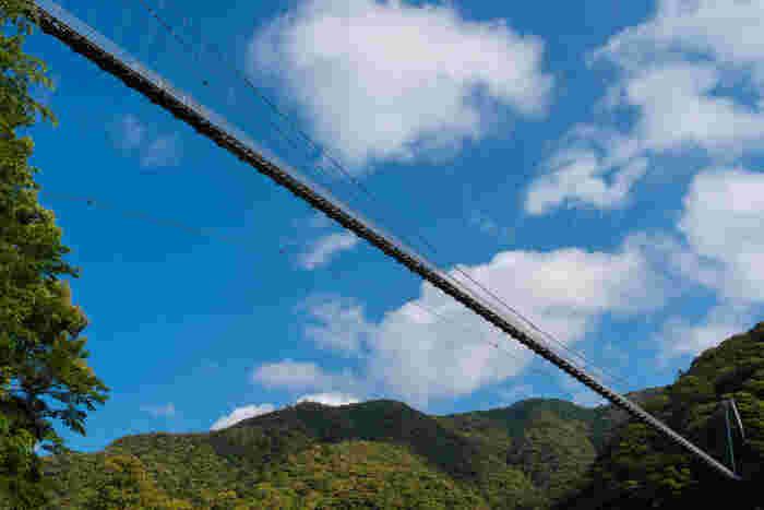 照葉大吊橋は、綾川沿いの渓谷に架かる歩行者専用の吊橋で全長さ250メートルに及びます。