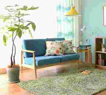観葉植物の王道・パキラは大変育てやすいので、初心者にもおすすめ。風水学的に「運気が上がる」と言われていて、お祝いのプレゼントにも喜ばれます。