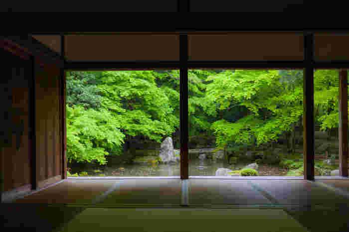 叡山電鉄・三宅八幡駅から徒歩7分、比叡山の麓にある蓮華寺。池には鶴や亀に見立てた石が配置され、その上には青々とした楓が覆いかぶさるように枝を伸ばしています。