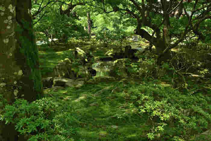 庭のあちこちに苔の見どころが散在しています。庭園の緑と相まって、とても綺麗な色合い。