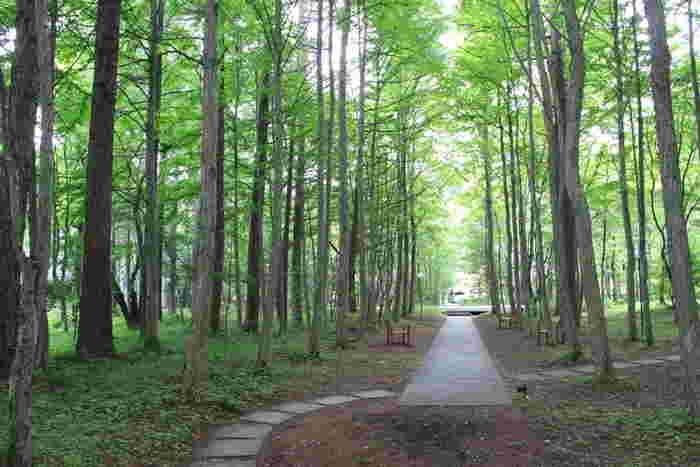 敷地内には森林浴を楽しめる散歩道も。軽井沢の自然をホテルにいながらにして堪能できます。