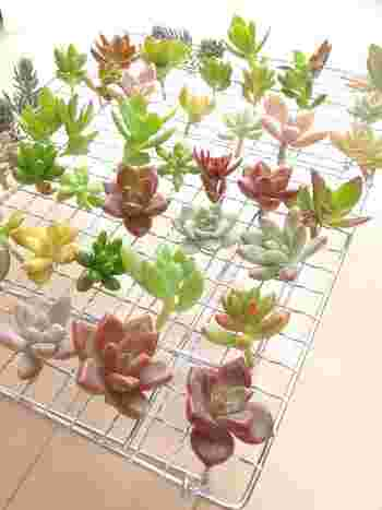 多肉植物は、他の植物に比べれるとお手入れも楽ちんで、水やりも少なくて済むので案外お部屋の中でも放置しがち・・・。多肉植物からのSOS見逃していたりしませんか・・・?  下記の項目の一つでもチェックが付いたら、植え替えのタイミングです。