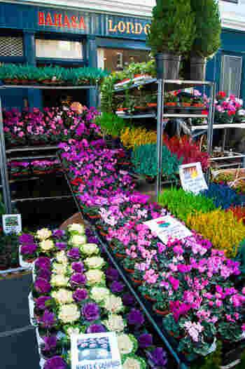 そしてイングリッシュガーデンを作るのに欠かせないのがフラワーマーケット。季節の花々が色とりどりに並びます。 草花だけでなく、ガーデニンググッズも充実しているので、初心者も気軽にガーデニングを楽しめる環境が身近にあるんです。