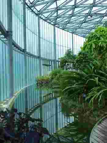 一つの大きなドームの中に、大掛かりな池や滝を作るなど、熱帯に限りなく近い環境の中、植物が立体的にレイアウトされています。