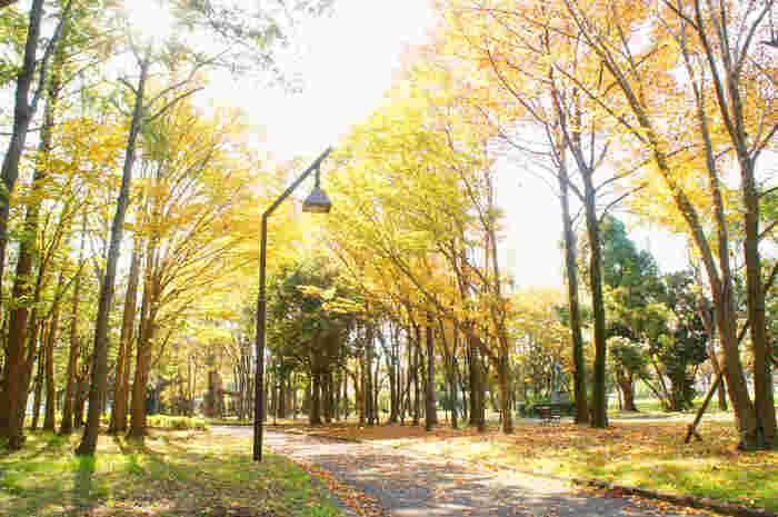 街や公園の木々が黄金に色づき始め、本格的な秋の訪れを感じるようになりました。  公園のベンチでコーヒーを飲みながら秋の風景を楽しむのも素敵。ですが、この秋の季節を心から満喫するなら、紅葉の名所で贅沢に、紅葉狩りをしてみては。  赤・黄色といった雄大な自然のグラデーションは、圧巻の美しさ。まだ寒さが厳しくない、心地よく過ごしやすい今のうちに、ちょっと足を伸ばしてお出かけしましょう。