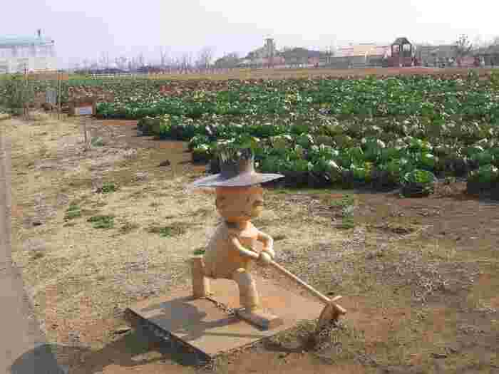 キャベツや大根、枝豆やさつまいもなど1年を通してさまざまなお野菜の収穫体験ができます。当日、参加チケットを購入すれば誰でも参加できるので、久しぶりに土に触って自然の恵みを感じてみるのもおすすめ。お子さんと一緒に体験するのも良いですね。