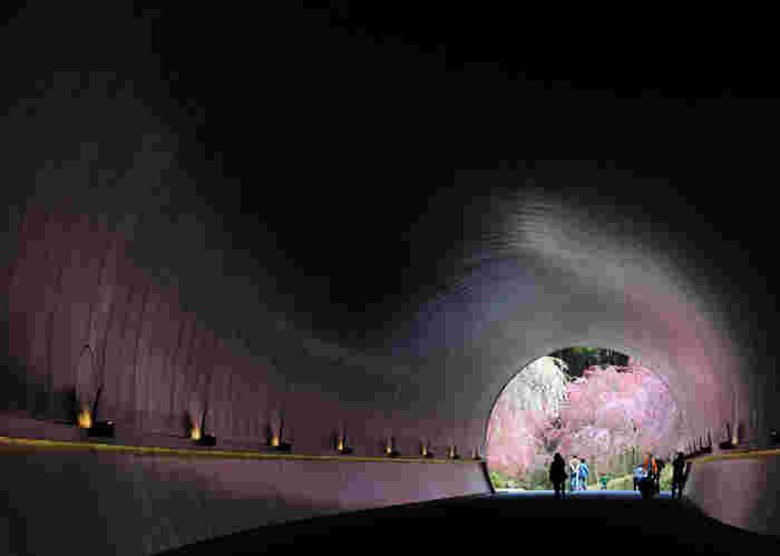 """いつも同じような構図で飽きてしまった!という方には、""""トンネル構図""""を探してみるのがオススメ♪名前の通り、見せたい物の周りをトンネルのようにぐるっと他の物や影を使って囲むように撮影する方法です。"""