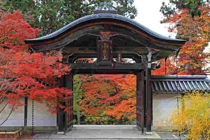「京都の秋」を堪能しよう!おすすめの紅葉スポットと美味しいご飯やさんをご紹介♪