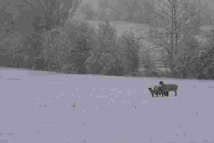 2015年カンヌ国際映画祭ある視点部門グランプリを受賞したG・ハゥコーナルソン脚本・監督作品の「ひつじ村の兄弟」。先祖代々から続く優良種の羊を生活の基盤としていた二人の老兄弟の話です。