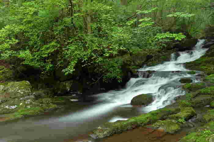 るり渓では、清流、園部川沿いに大小数多くの滝があります。ここでは、森林浴を楽しみながら、マイナスイオンをたっぷりと浴びて、身も心もリフレッシュすることができます。