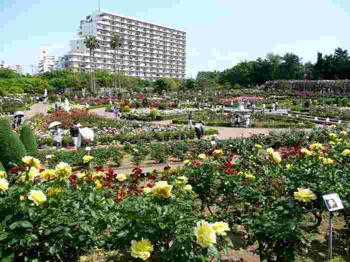 約12,000平方メートルの敷地には、800種類7,500株のバラが植えられています。駅からほど近いところに、こんなに広大な施設があるなんてステキですよね。